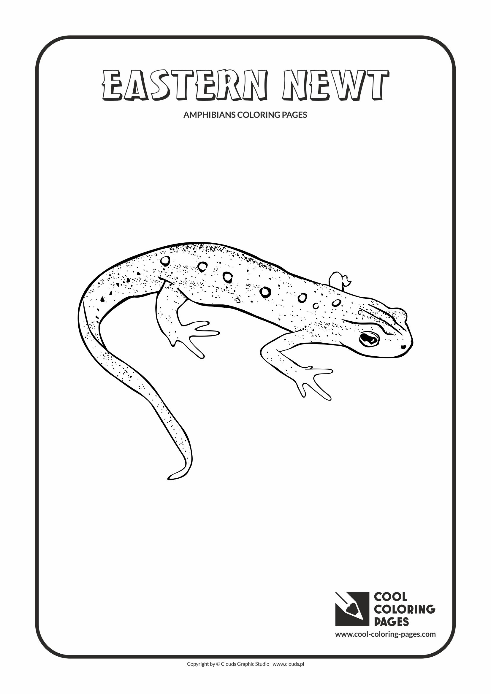 Eastern Newt coloring, Download Eastern Newt coloring for