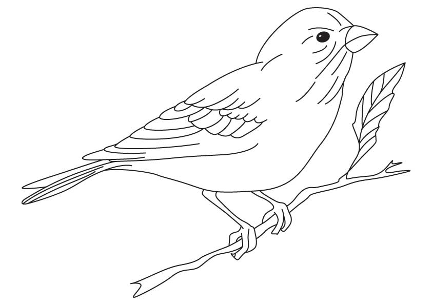 Finch coloring, Download Finch coloring for free 2019
