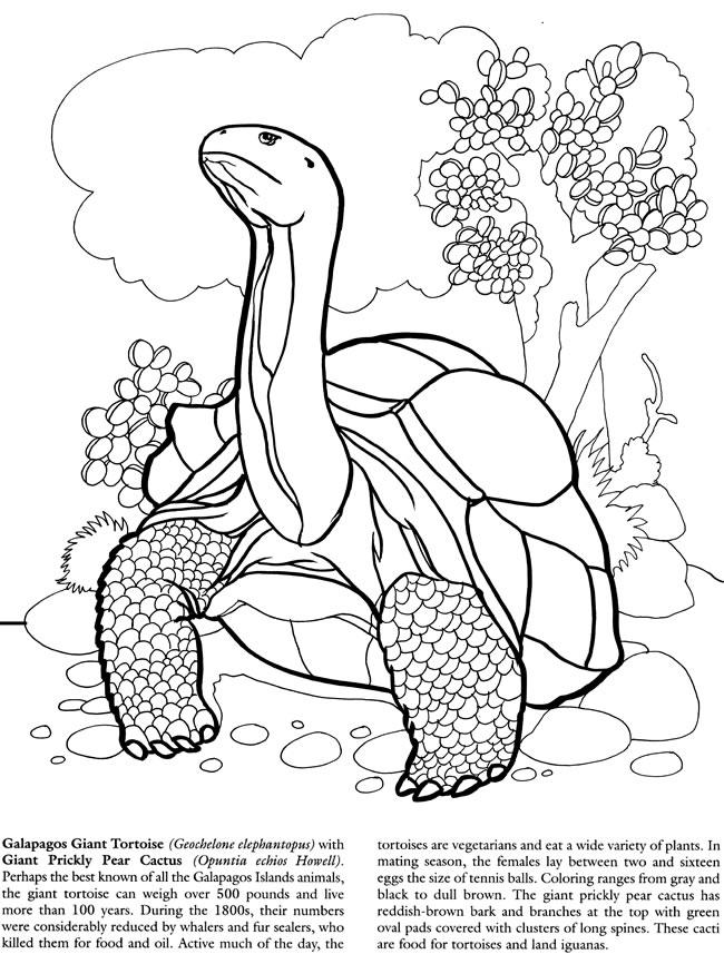 Galapagos Land Iguana coloring, Download Galapagos Land