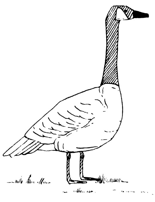 Geese Migration coloring, Download Geese Migration coloring