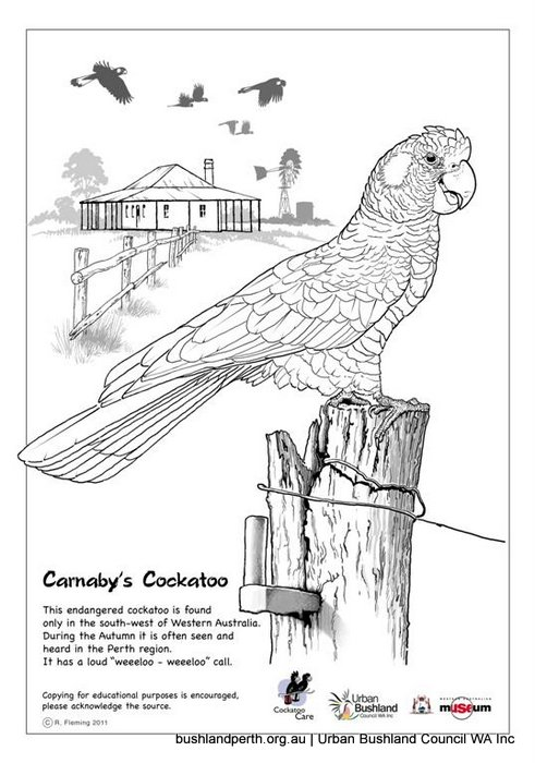 Download Glossy Black Cockatoo coloring for free