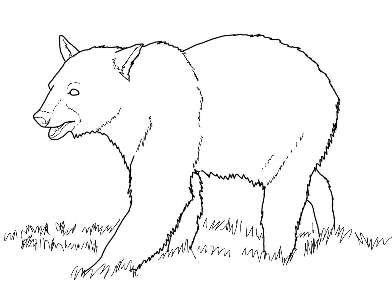 Grizzly Bear Coloring Download Grizzly Bear Coloring For