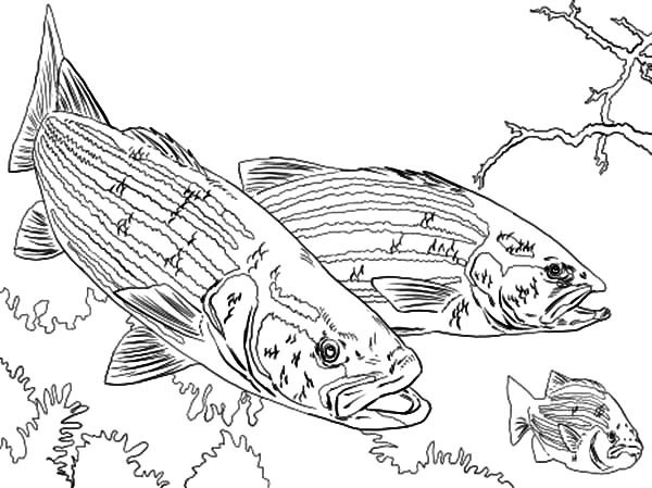 Guadalupe River coloring, Download Guadalupe River coloring