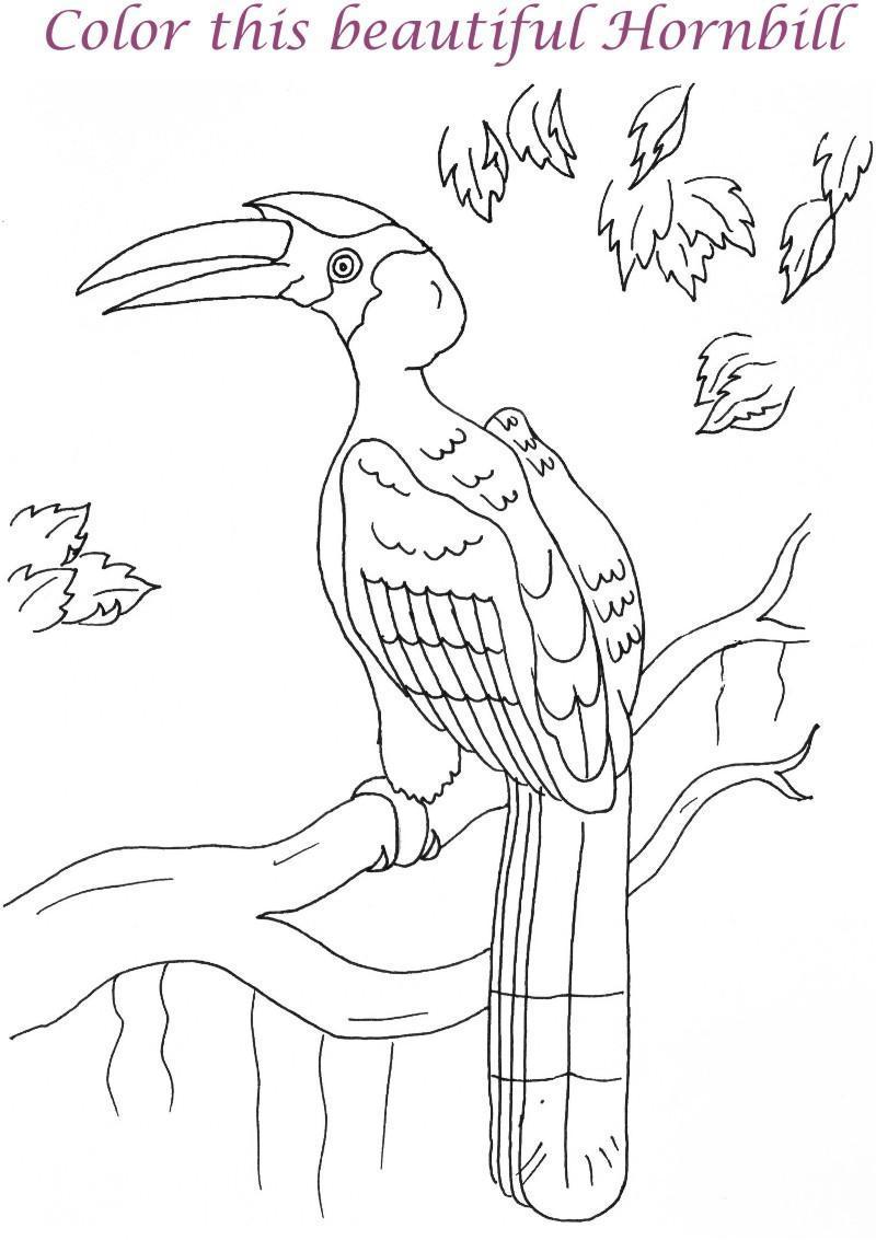 Hornbill coloring, Download Hornbill coloring