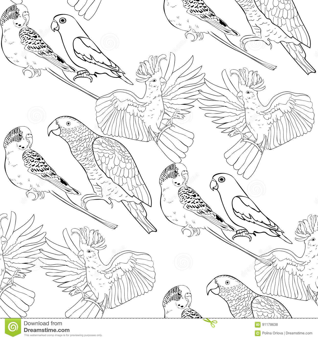 Download Kakadu coloring for free - Designlooter 2020 👨🎨