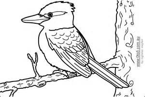 Kookaburra coloring, Download Kookaburra coloring for free