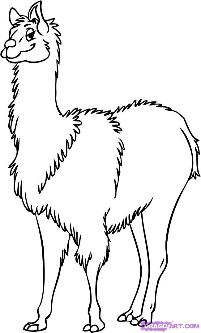 Lama coloring Download Lama coloring for free 2019