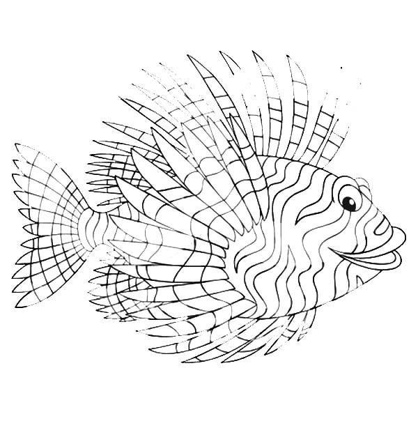 Minolta coloring, Download Minolta coloring