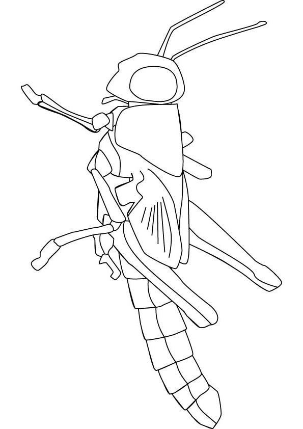 Locusts Drawing