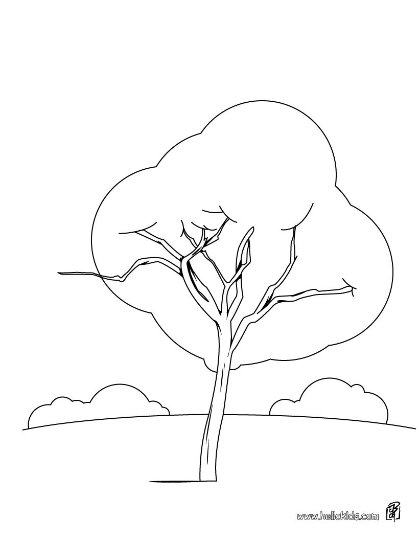 Maple Tree coloring, Download Maple Tree coloring for free
