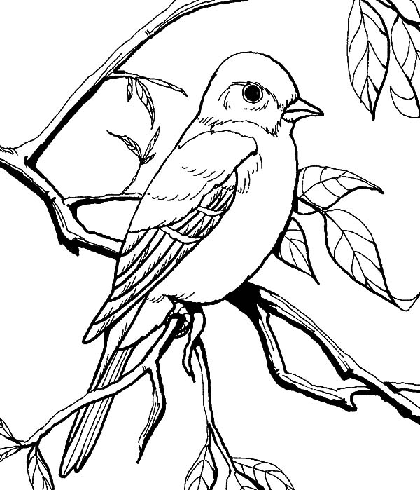 Mockingbird coloring, Download Mockingbird coloring for