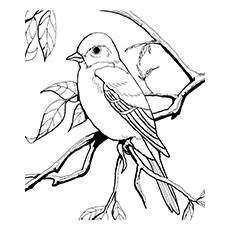 Mockingbird coloring, Download Mockingbird coloring for