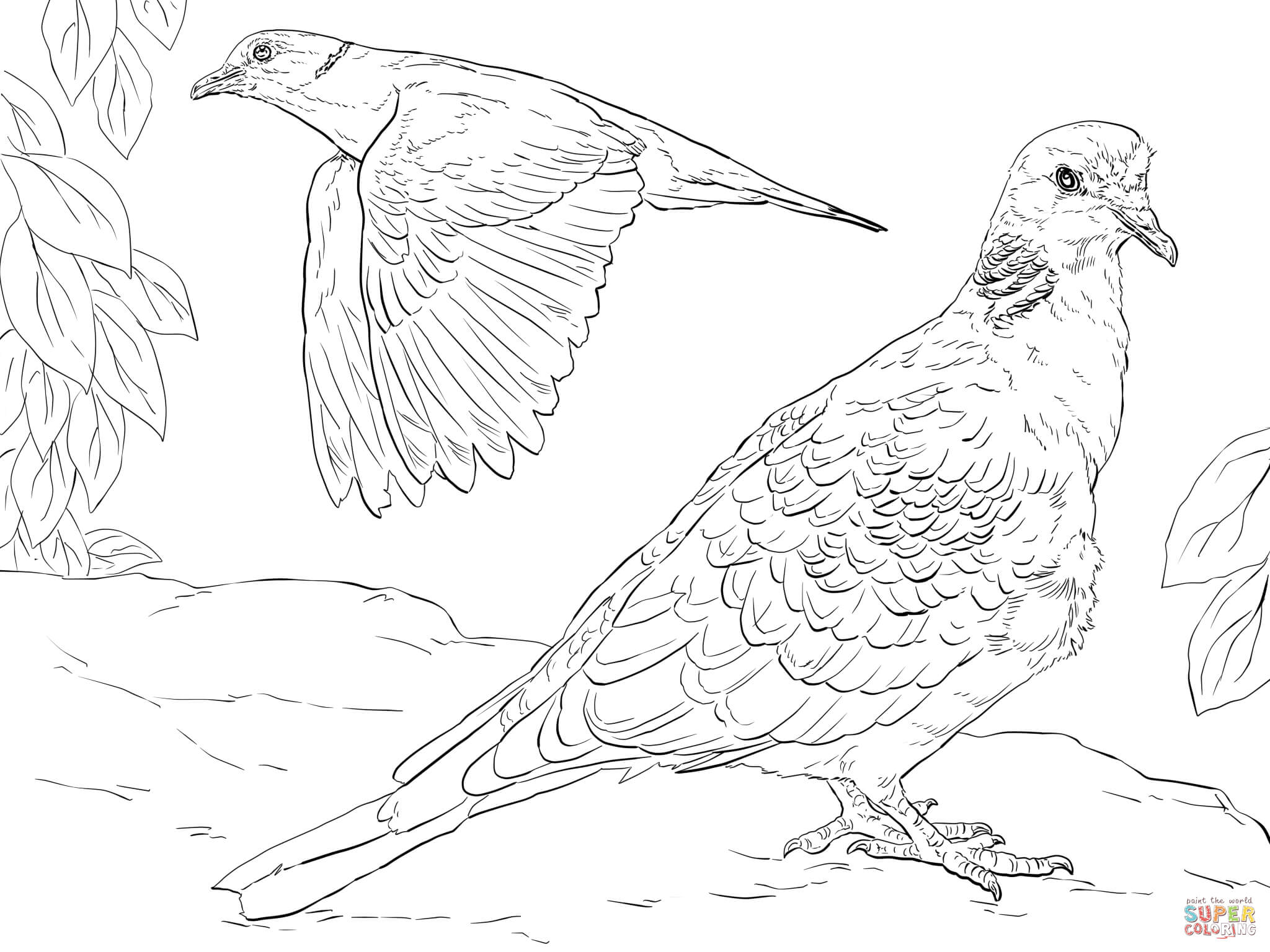 Turtle Dove coloring, Download Turtle Dove coloring for