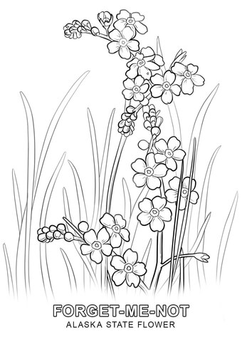 Myosotis coloring, Download Myosotis coloring