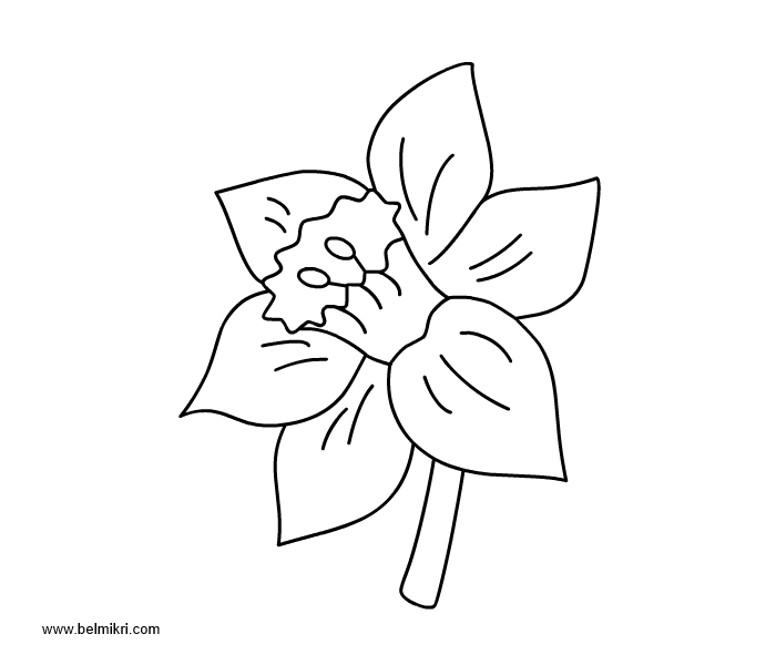 Narcissus coloring, Download Narcissus coloring