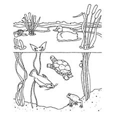 Freshwater Bird coloring, Download Freshwater Bird coloring