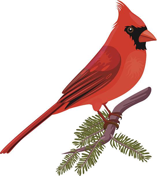 northern cardinal clipart