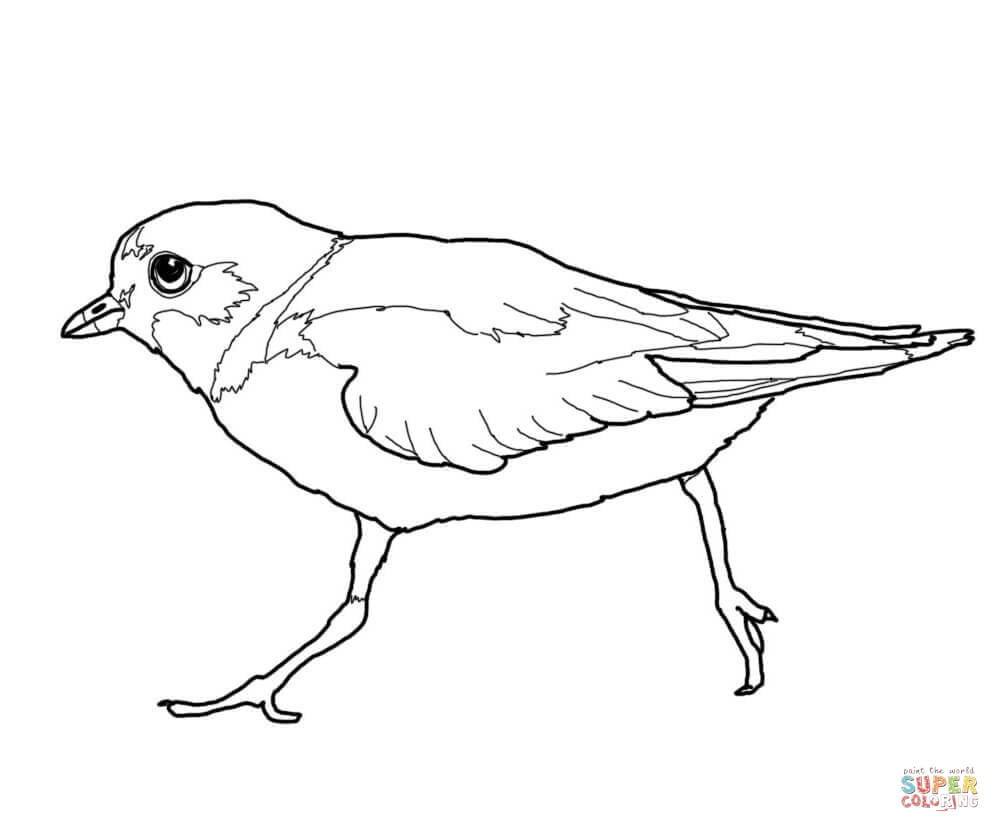 Plover coloring, Download Plover coloring