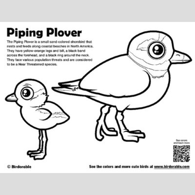Piping Plover coloring, Download Piping Plover coloring