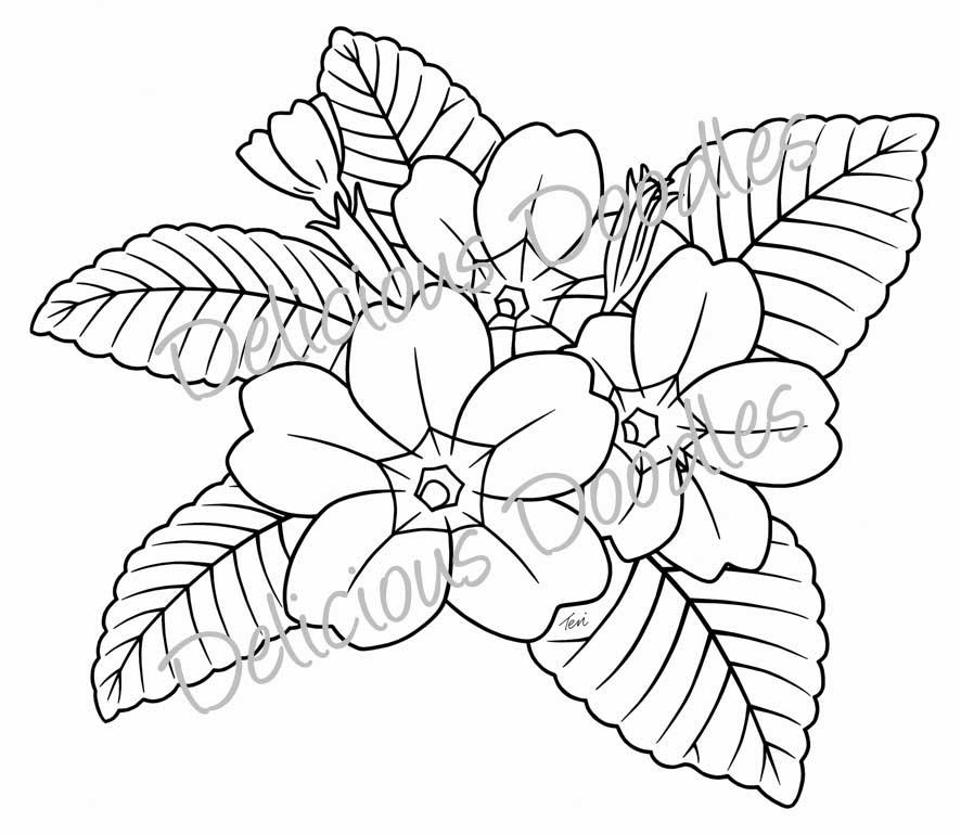 Primrose coloring, Download Primrose coloring
