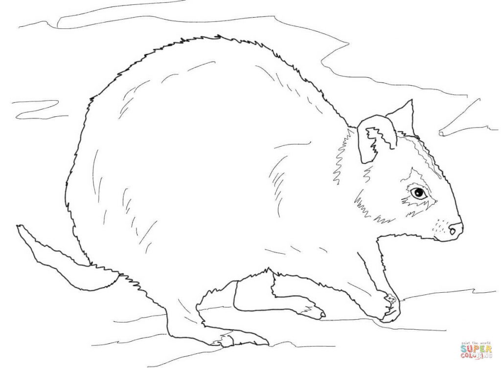 Quokka Family Coloring Page