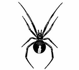 Redback Spider coloring, Download Redback Spider coloring