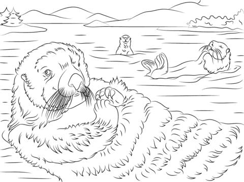 Sea Otter coloring, Download Sea Otter coloring