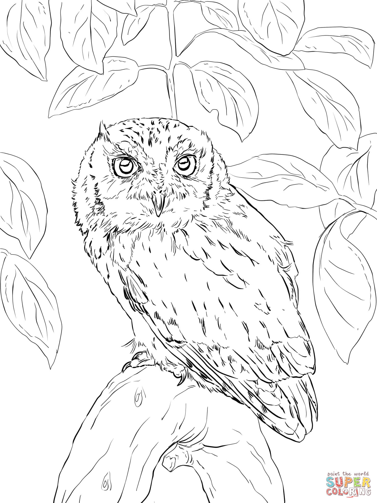 Download Short Eared Owl Coloring For Free