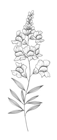 Snapdragons coloring, Download Snapdragons coloring for