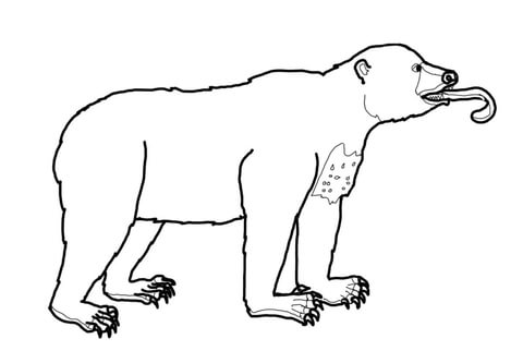 Sun Bear coloring, Download Sun Bear coloring