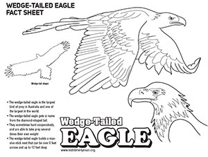 Wedge Tailed Eagle coloring, Download Wedge Tailed Eagle