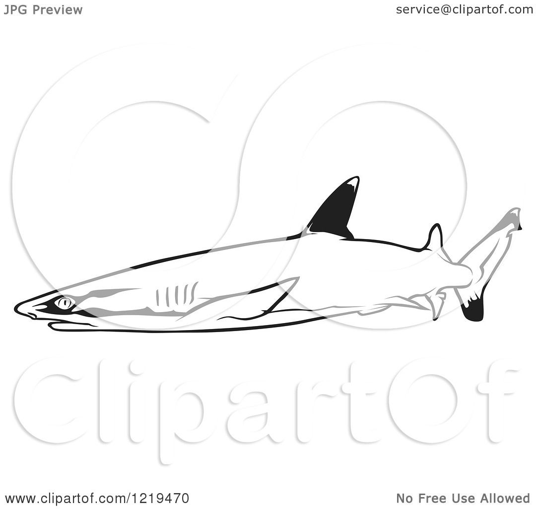 White Tipped Reef Shark coloring, Download White Tipped