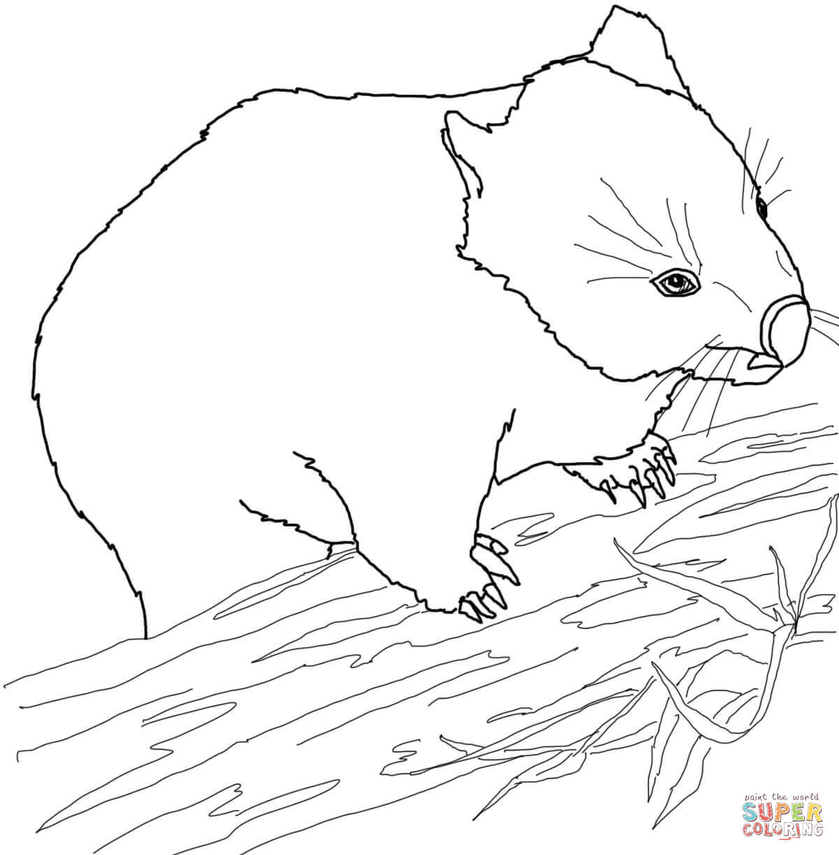 Download Wombat Coloring For Free