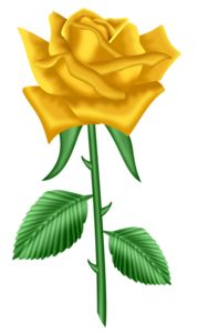 rose yellow clip clipart flowers flower birth roses cliparts 300px 37kb drawings