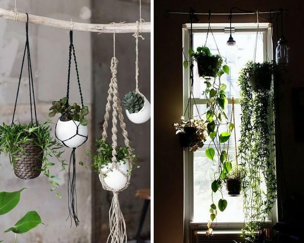 Plantes suspendues fonctionnelles et dcoratives
