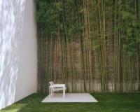 Planter des bambous dans son jardin - quelle bonne ide!