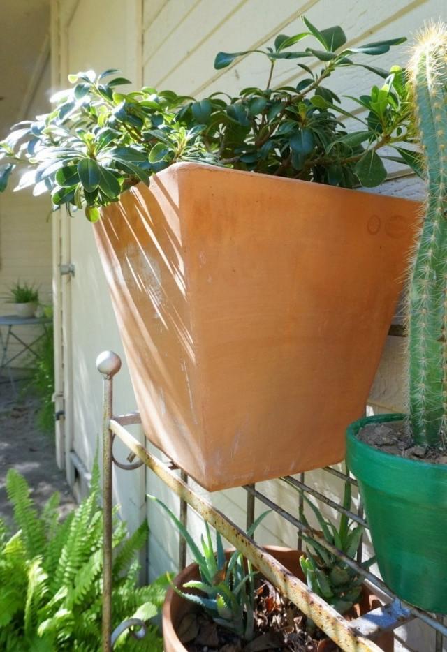 Entretien de jardin  conseils utiles pour le dbut de lautomne