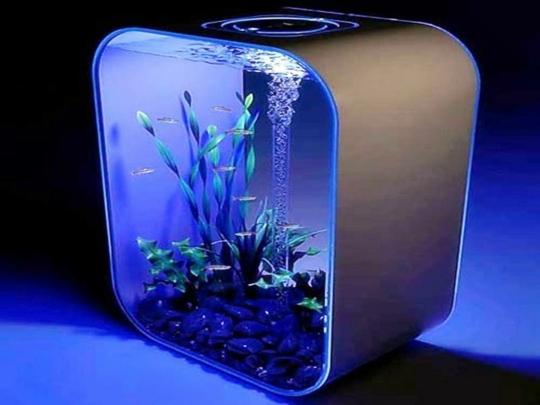Aquarium design le confort pour vous et vos petits poissons