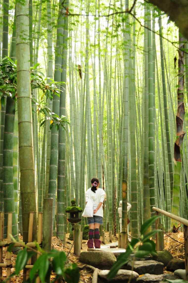 Bambou dco 40 ides pour un dcor jardin avec du bambou