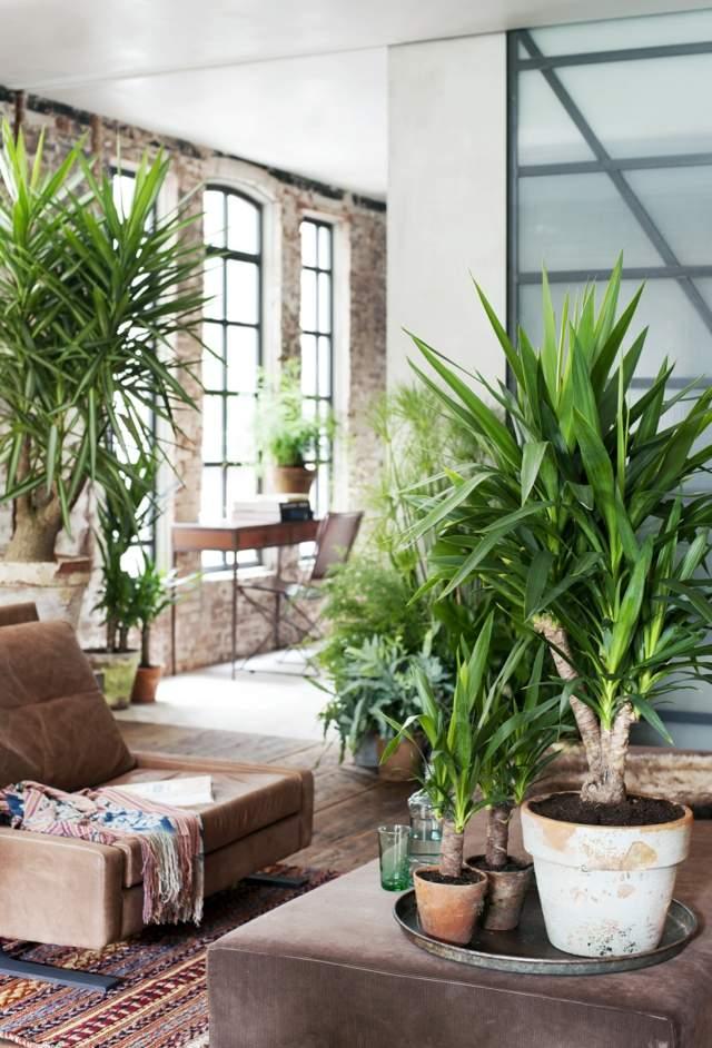 Comment entretenir les plantes vertes