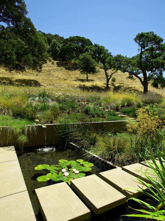 Plantes de bassin en 20 ides  jardin et passions