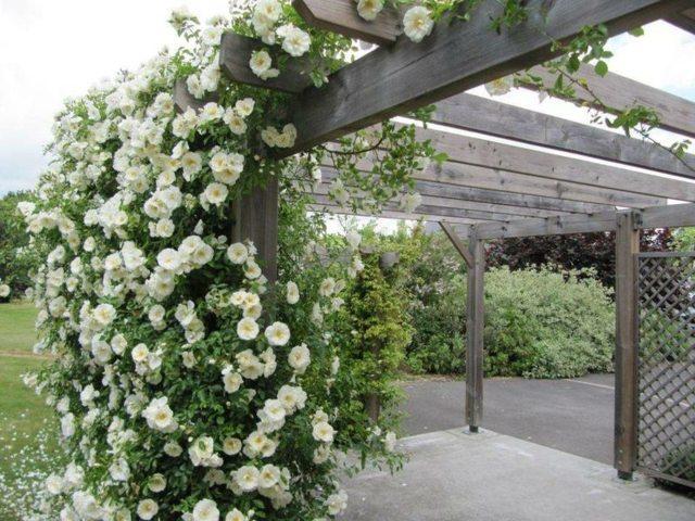 Pergola Bois Pour Plantes Grimpantes  Moregs