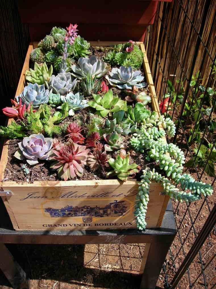 Ideas Jardin Suculentas