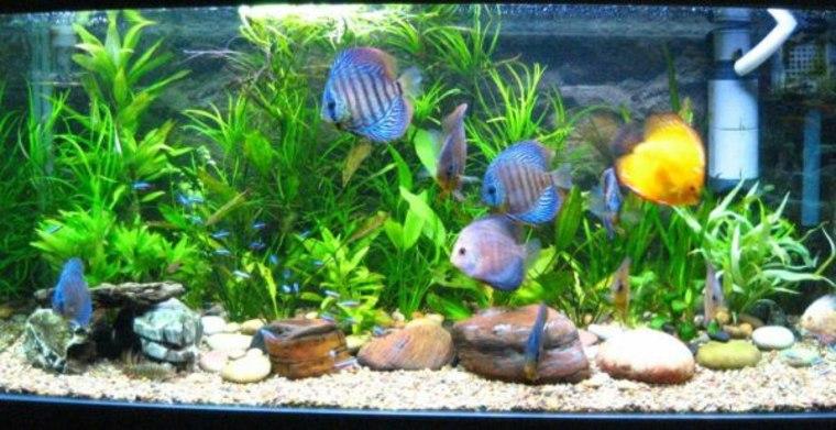 Dcor Aquarium Lgant Pour Que Vos Poissons Soient Heureux