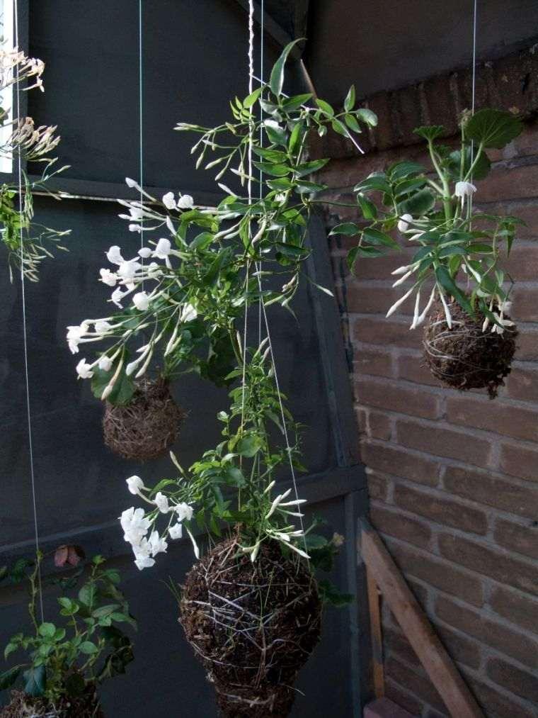 Art floral japonais Kokedama  ides de pots de plante naturels