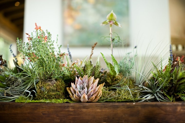 Plantes Succulentes 75 Ides De Compositions Florales