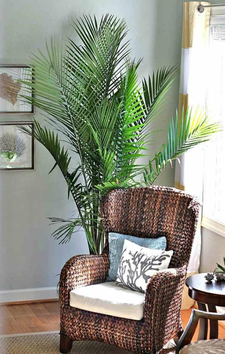 La dcoration dintrieur avec de grandes plantes dintrieur