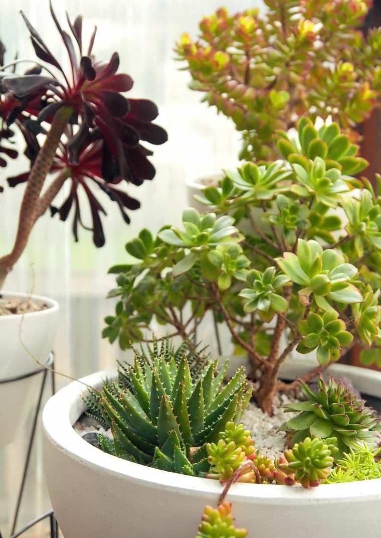 Les plantes succulentes  votre guide pratique