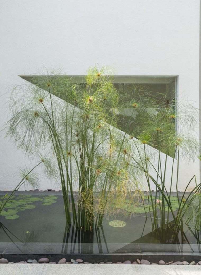 Jardin aquatique  dcouvrez notre slection dimages magnifiques