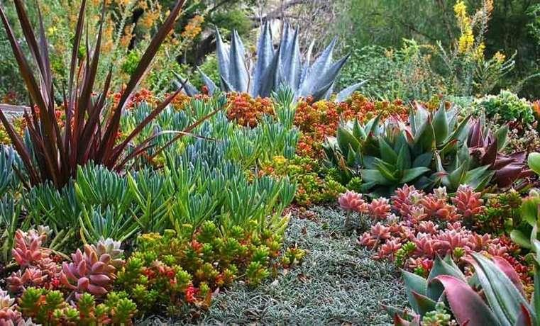 15 Ides Pour Crer Son Propre Jardin De Succulents Avec
